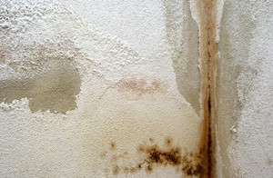 mold remediation little rock